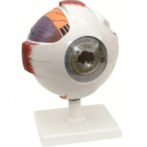 Модел на човешко око
