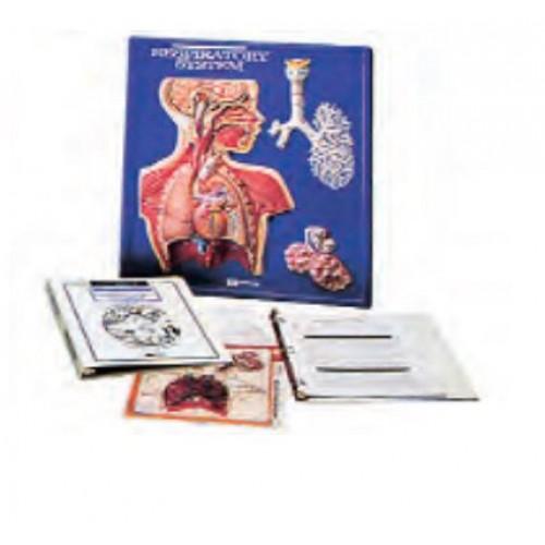 Дихателна система, HS2672